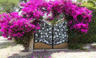 Có nên trồng cây dây leo theo phong thủy trước nhà?