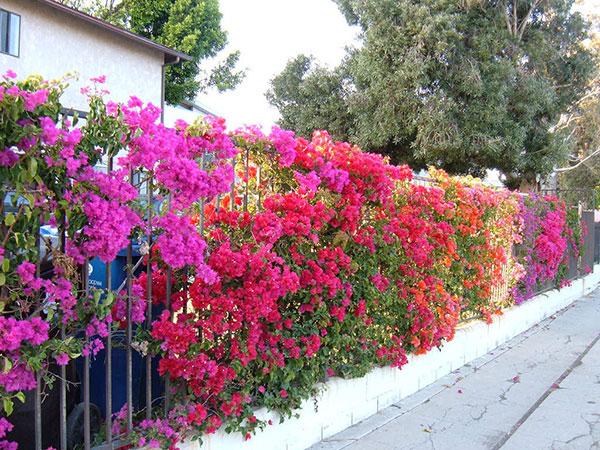 Thiết kế giàn hoa trước nhà giúp gi tăng vẻ đẹp thẩm mỹ cho không gian